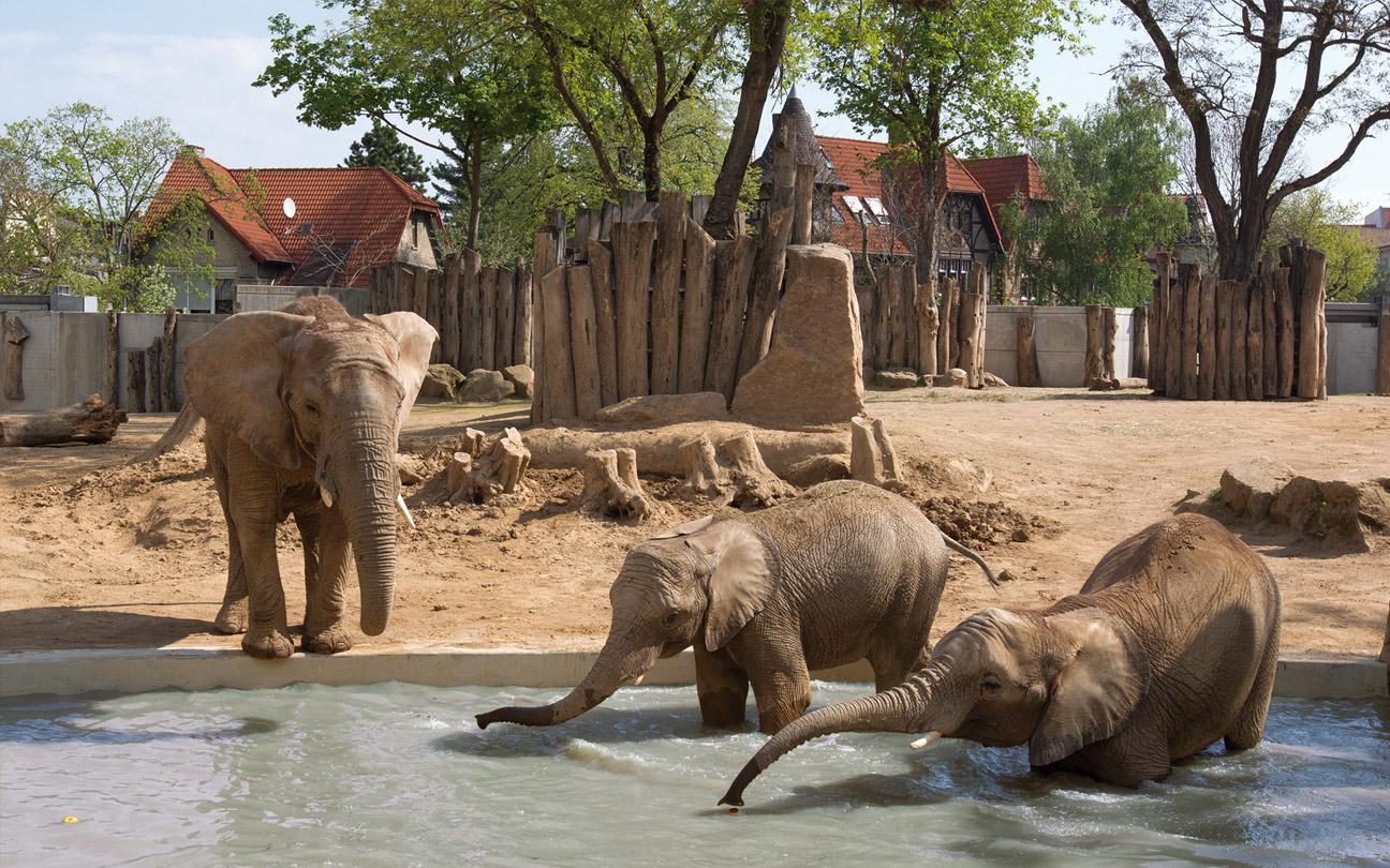 Zoo Halle
